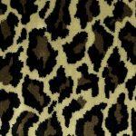 Africa Leopard farve1000 530